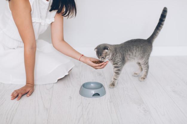 Cómo entrenar a un gato
